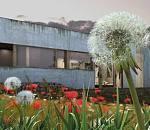 maya蒲公英模型  超写实3D花丛模型 精细植物花朵