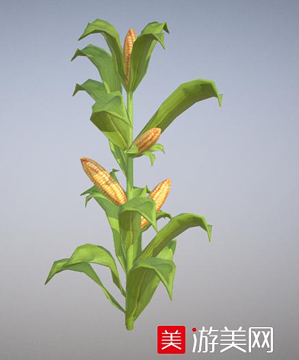 玉米 玉米地