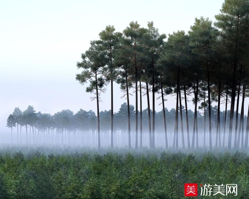 大雾覆盖树林场景模型下载
