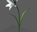 maya百合花模型