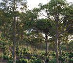 15种树木,60个模型
